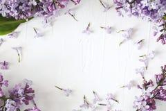 Lily okwitnięcie Bzów kwiatów rama na białym tle, odbitkowy zdrój Zdjęcie Stock
