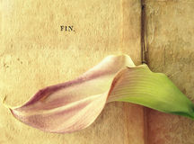 Lily on old book pages with fin word Royalty Free Stock Images
