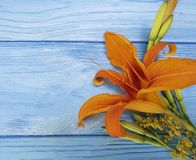 Lily beautiful orange season holiday a blue wooden background vintage. Lily orange beautiful a blue wooden background season bouquet elegant vintage decoration Stock Photography
