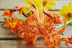 Lily and orange flowers Stock Photography
