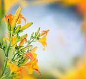 Lily over blurred nature background, floral border royalty free stock images