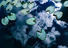 Lily Pad imagen de archivo libre de regalías