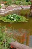 Lily Pad Background Royaltyfri Foto