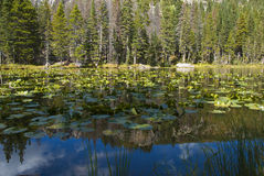 Lily Pad Lake in the Rockies Stock Photography