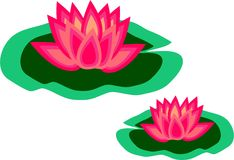 Lily Pad Royalty Free Stock Photos