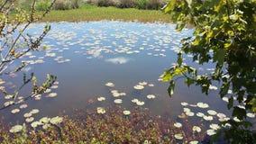 Lily Pad Pond, Zuid-Ohio, NS Canada royalty-vrije stock foto's