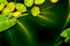 Lily pads abstract stock photos