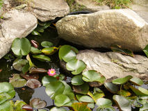 Lily Pads Along Large Rocks. Large rocks rest above a small pond. Lily pads grow from out of the water and around the rocks. A pink lily flower is among them in Stock Photography