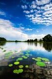 Lily Pads e nuvens Imagem de Stock