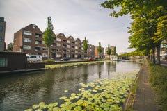 Lily Pads en un canal en Rotterdam, Países Bajos foto de archivo