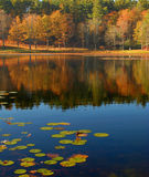 Lily pads on the lake. During autumn Royalty Free Stock Photos