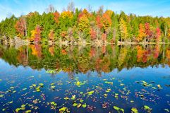Lily pads and mirror reflections of fall colors at Bays Mountain Lake in Kingsport, Tennessee during autumn. Amazing fall foliage reflection in the calm waters Royalty Free Stock Photo