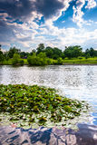 Lily pads in the pond at Patterson Park in Baltimore, Maryland. Stock Images