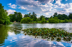Lily pads in the pond at Patterson Park in Baltimore, Maryland. Stock Photography