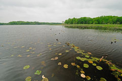 Lily pads on a quiet Lake Stock Photography