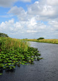Lily pads on swamp in florida everglades Stock Photos