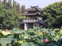 Lily pads in West Lake, Hangzhou, Zhejiang, China Stock Photo