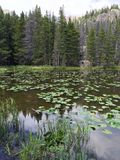 Lily pads and wetland grass on lake in Rocky Mountain National Park Royalty Free Stock Photography