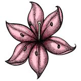 Lily painted in graphic style points and lines. A  Royalty Free Stock Photography