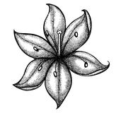 Lily painted in graphic style points and lines. A great figure for a tattoo Stock Photography