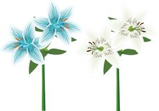 Lily Pair Blue and White vector illustration