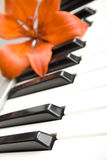 Lily on the piano Royalty Free Stock Photos
