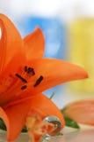 lily pomarańcze Obraz Stock