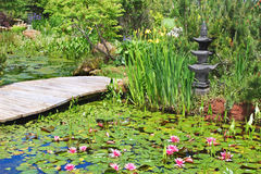 Lily Pond 1 Stock Images