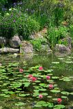 Lily Pond Royalty Free Stock Image