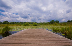 Lily pond with clouds. Pond with pier covered with lilies on a cloudy day Royalty Free Stock Photo