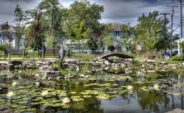 Lily pond royalty free stock photos
