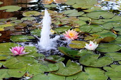 Lily pond with fountain Royalty Free Stock Image