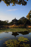 Lily pond at Gyeongbokgung Castle. Shoot of a Lily pond, found on Gyeongbokgung castle, Seoul Stock Image