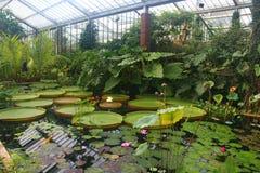 Lily Pond innerhalb der Prinzessin Diana Conservatory an botanischen Gärten Kew stockfoto