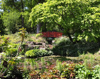 Lily Pond met Japanse brug Stock Foto