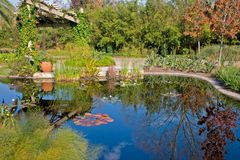 Lily pond reflections. Water lily pond with fall reflections Royalty Free Stock Photography