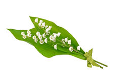 Lily Posy. Posy of lily of the Valley, Tied with green ribbon Stock Photo