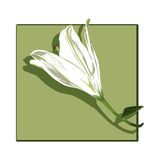 Lily profile clip art Royalty Free Stock Image