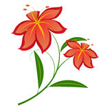 Lily red Stock Images