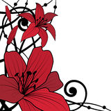Lily red background Royalty Free Stock Images