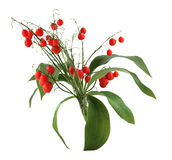 Lily red berry Royalty Free Stock Images