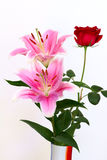 Lily and rose. Two pink lilys and a rose are abloom on white background Royalty Free Stock Image