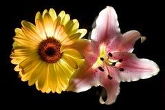 lily rumianek zdjęcia stock