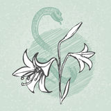 Lily and snake with bud outline sketch vector. Vintage floral illustration. Royalty Free Stock Photo