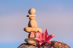 Lily at stack of pebbles Stock Photography