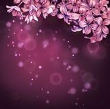 Lily tło Obrazy Royalty Free