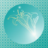 Lily on a turquoise background. Vector postcard Stock Image