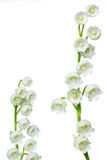 Lily of the valey Royalty Free Stock Images