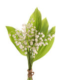Lily of the valey Royalty Free Stock Photos