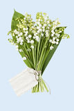 Lily of the Valey Stock Image